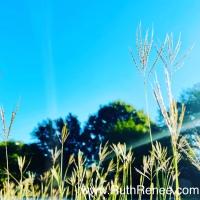 The benefits of a gratitude practice…