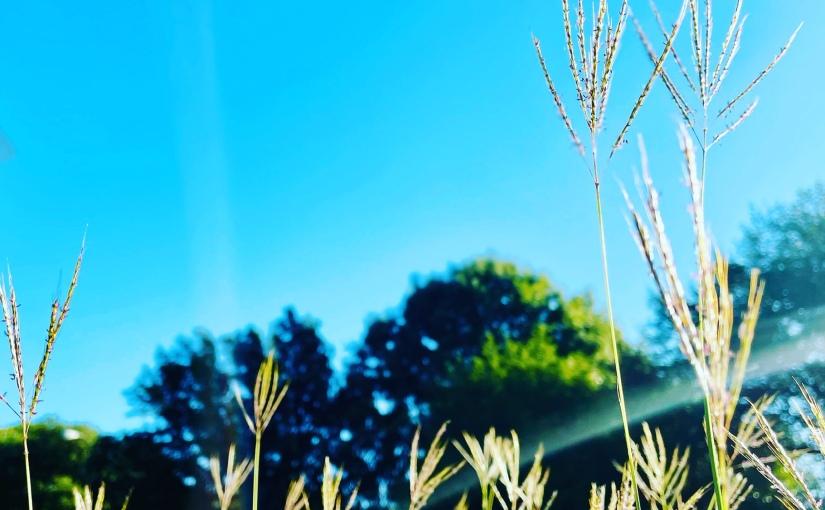 The benefits of a gratitudepractice…